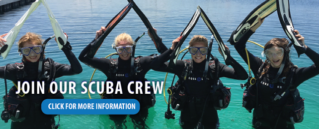 join our scuba crew