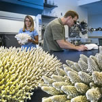 Student researchers researching coral